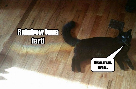 caption Cats rainbow