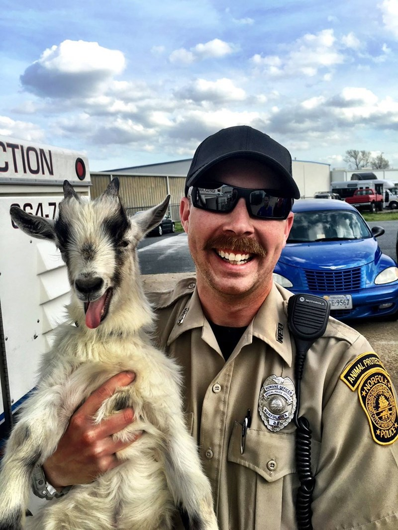 goat poses for photo after leading police on wild chase
