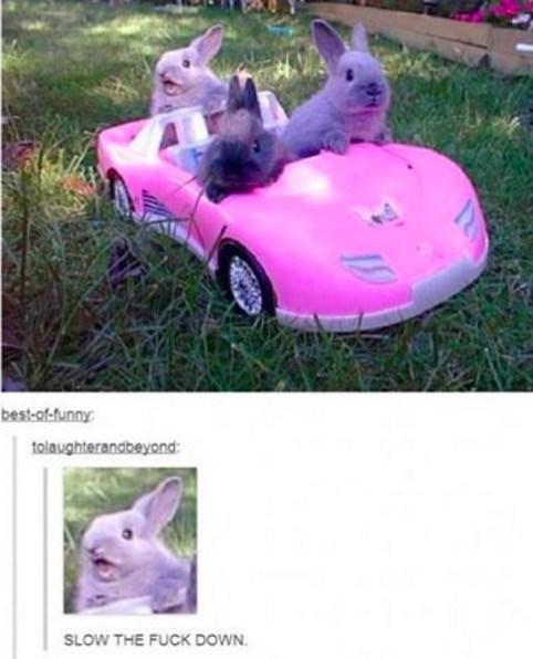 IRL cars rabbits - 8762541056