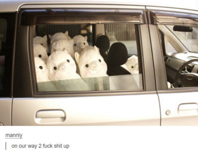 IRL cars cute alpacas