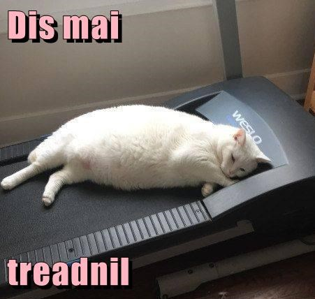 animals treadmill caption Cats - 8762543616
