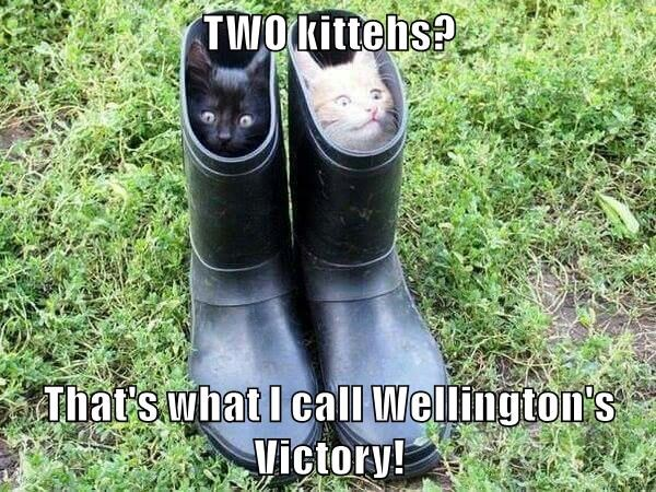 animals wellingtons caption Cats - 8762557952