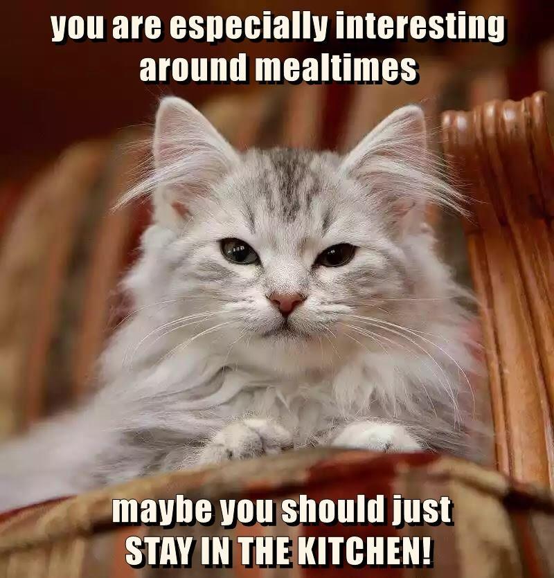 caption Cats - 8762585344