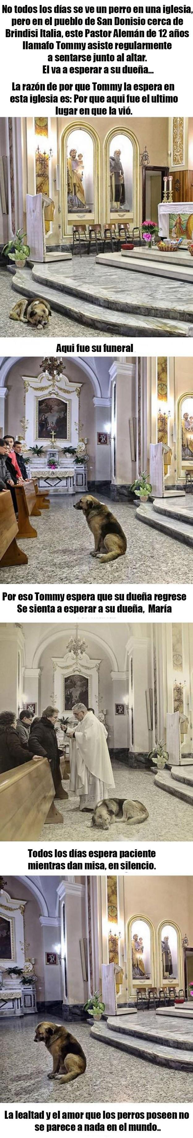fiel como un perro