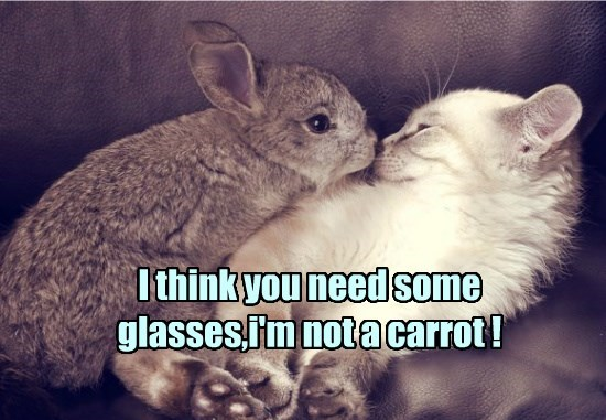caption,Cats,bunny