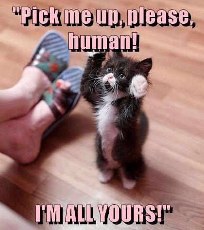 animals caption Cats - 8762775040