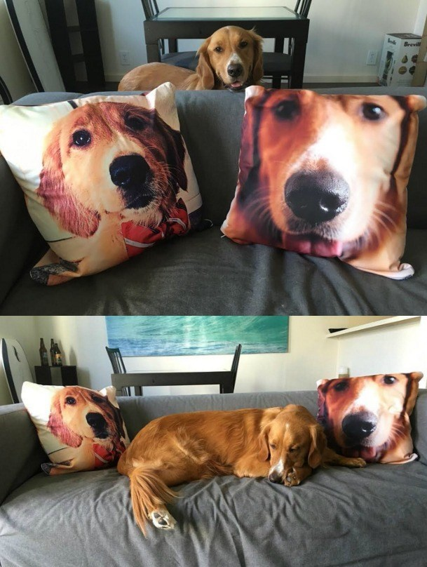 dog has pillows with his own face on them