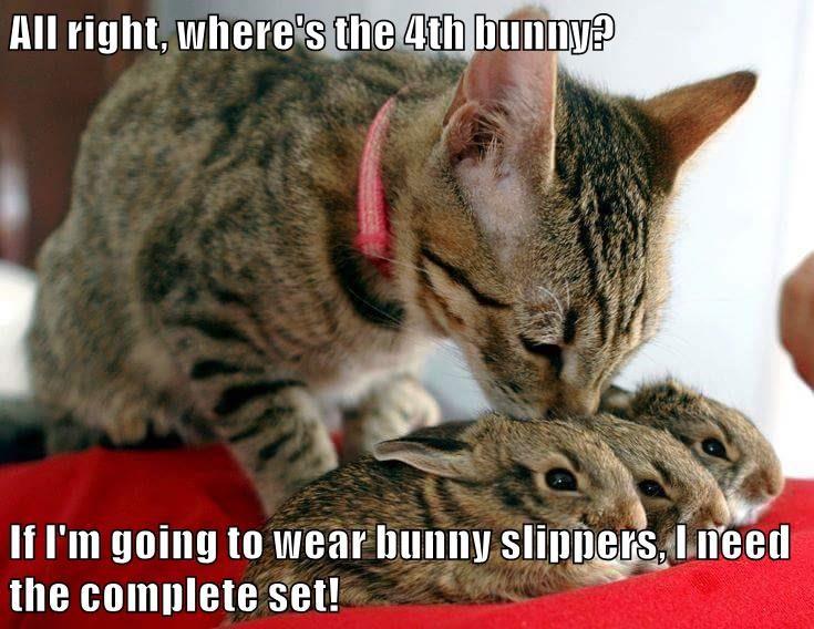 animals caption Cats - 8762844672