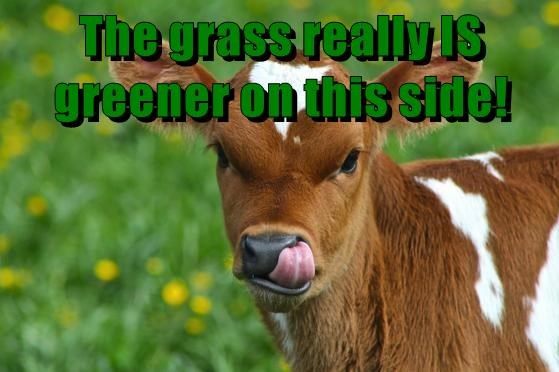 The grass really IS greener on this side!