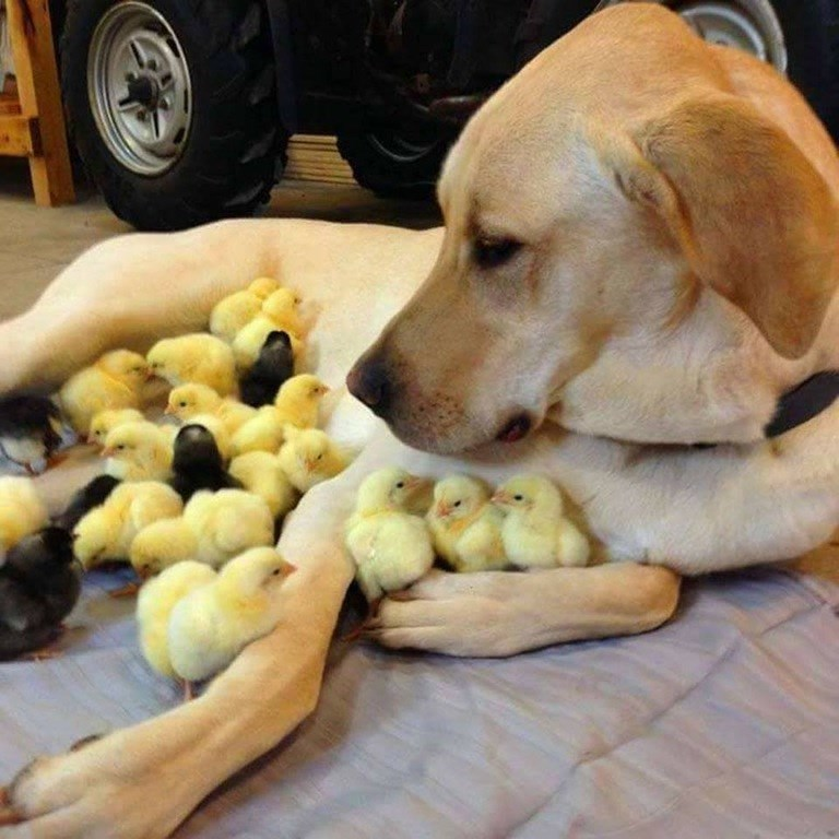 ultimate chick magnet