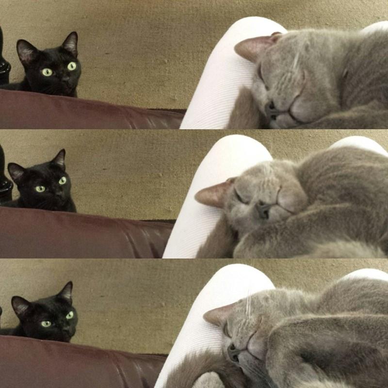 basement cat is always watching