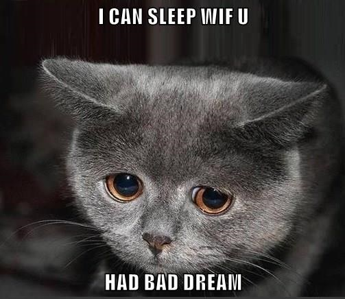 cat,bad dream,sleep,caption
