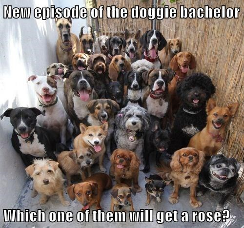 animals dogs bachelor caption - 8763068928