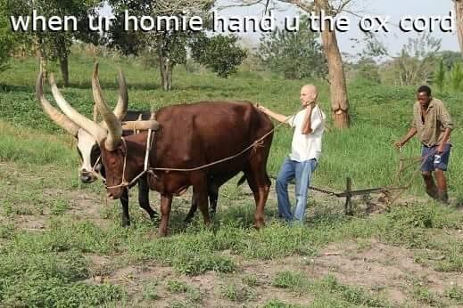 aux puns oxen - 8763099136