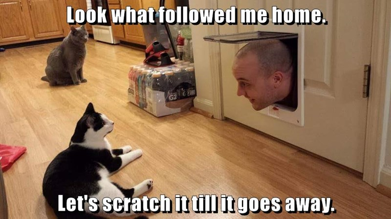 followed,cat,scratch,goes,caption,home,away