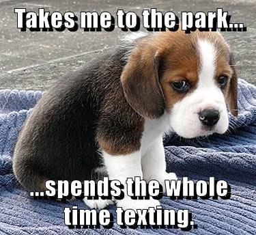 animals dogs park caption texting - 8763101952