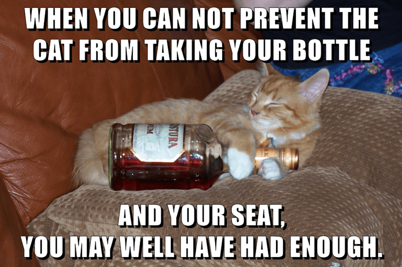 WHEN YOU CAN NOT PREVENT THE CAT FROM TAKING YOUR BOTTLE  AND YOUR SEAT,                                         YOU MAY WELL HAVE HAD ENOUGH.