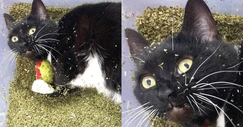 cats catnip rehab funny