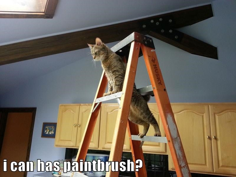 i can has paintbrush?