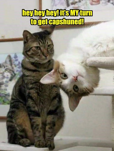 caption Cats - 8763293696