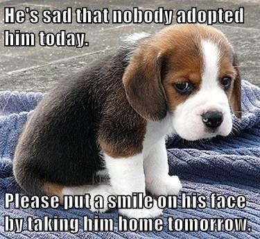 animals adopt caption - 8763406848