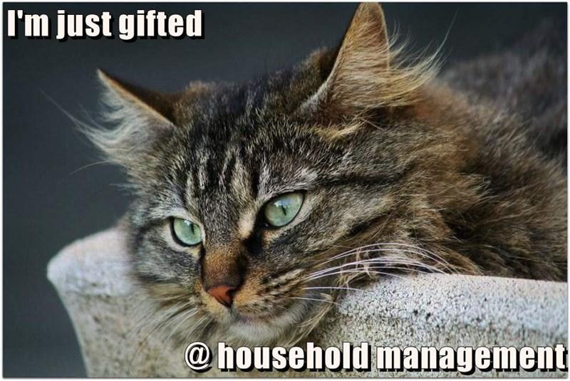 caption,Cats