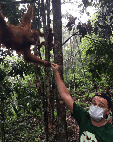 good guy leonardo dicaprio needs your help to save the sumatran orangutan