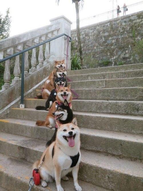 doge squad goals
