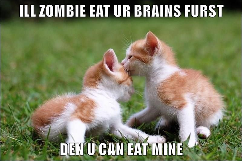 animals brains caption Cats - 8763574784
