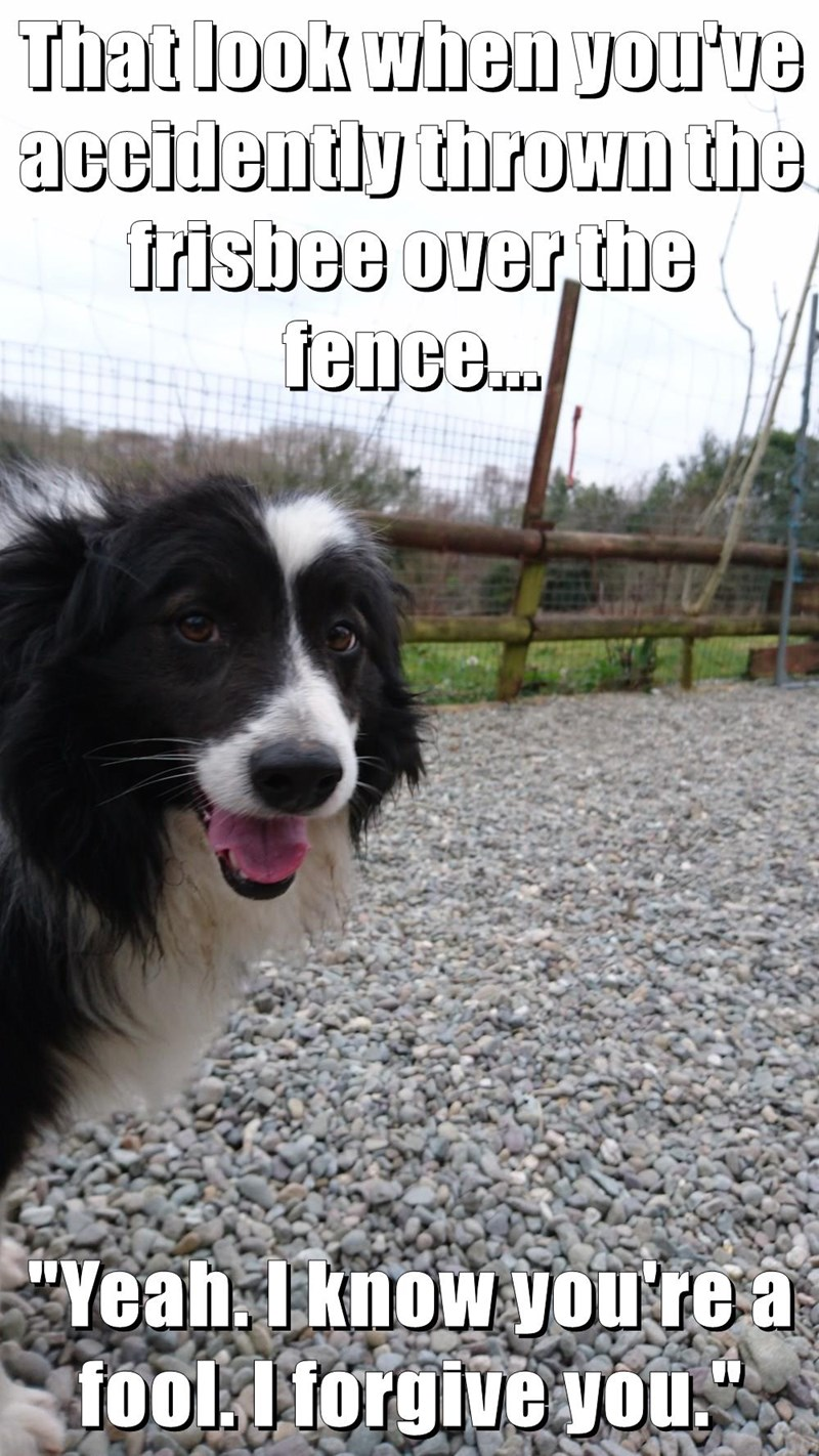 """That look when you've accidently thrown the frisbee over the fence...  """"Yeah. I know you're a fool. I forgive you."""""""