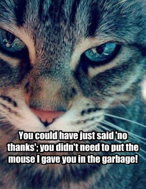cat caption garbage mouse - 8763774976