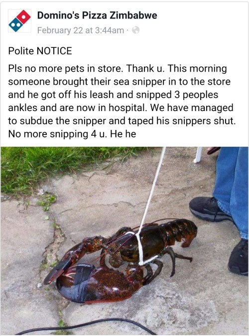 animals pets lobster Sea Snippers Gonna Snip