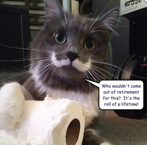 caption Cats - 8764014592