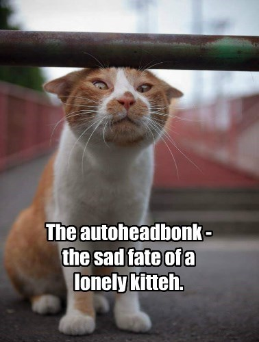 The autoheadbonk - the sad fate of a lonely kitteh.