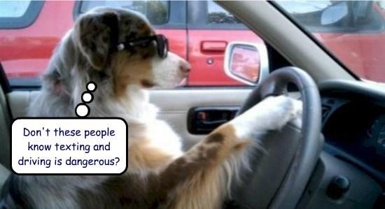 caption dogs - 8764058112