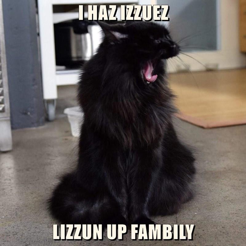 Cats caption - 8764064000