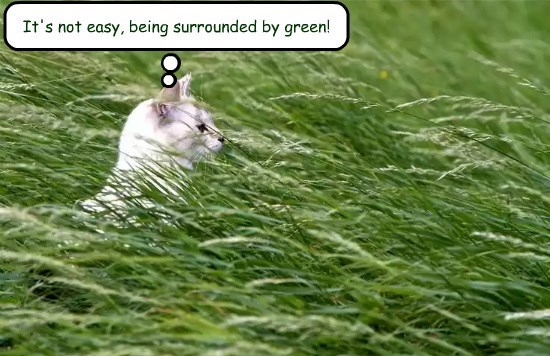 It's not easy, being surrounded by green!