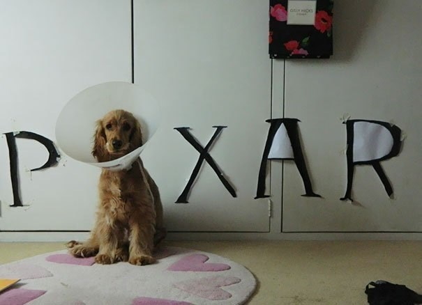 pixar dog cone of shame