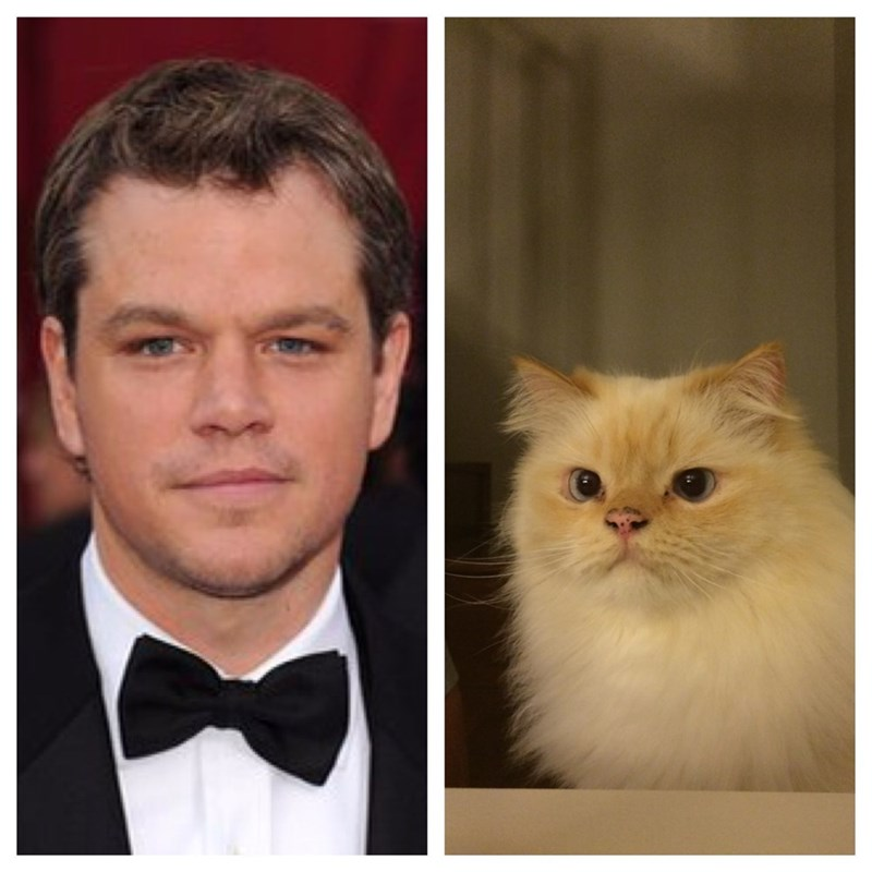this cat looks like matt damon