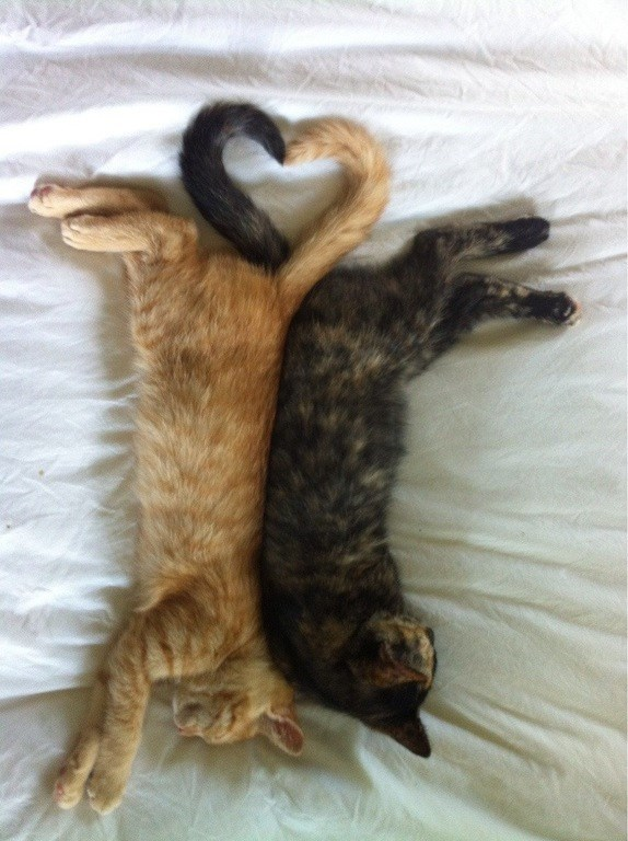 their tails make a purrfect heart