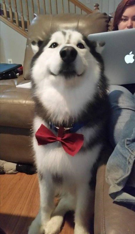 what a fancy gentleman