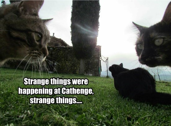 caption,cathenge,Cats