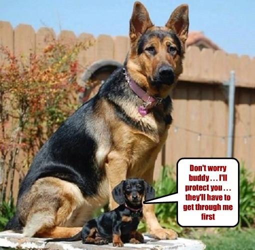 dogs caption - 8764370688