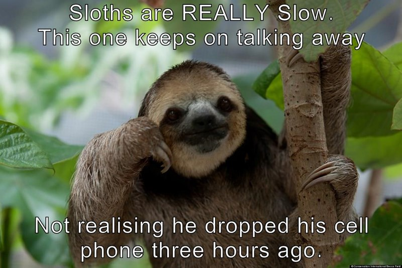 Sloths are REALLY Slow.                 This one keeps on talking away  Not realising he dropped his cell phone three hours ago.