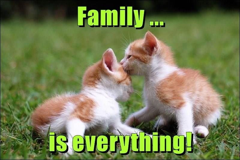 animals caption Cats - 8764467200
