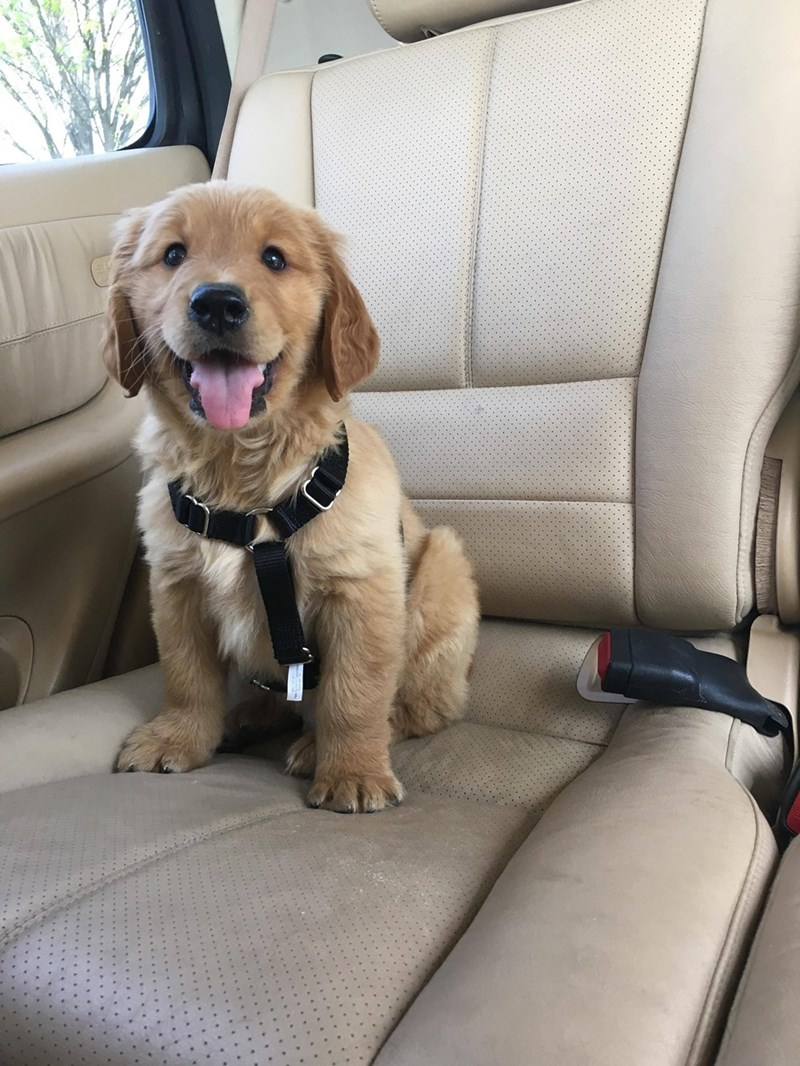 puppys first ride home
