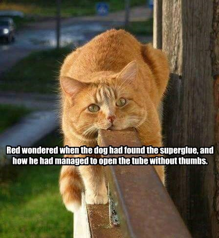 superglue caption Cats - 8764587520