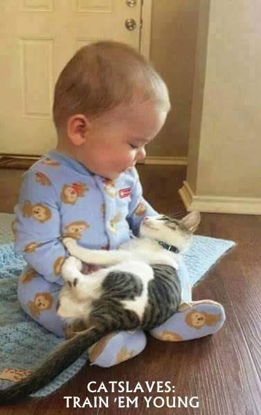 CATSLAVES:                                                TRAIN 'EM YOUNG