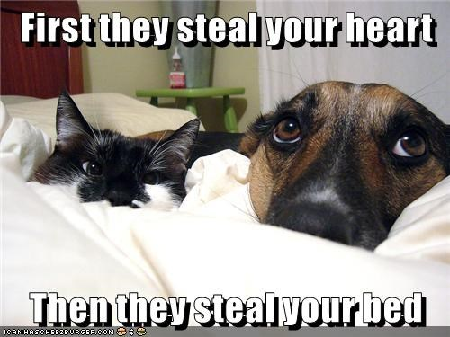animals dogs caption steal cat heart bed - 8765160960
