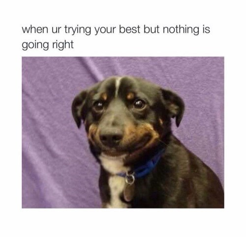 dogs memes bad day Just Keep Holding That Frown Upside Down